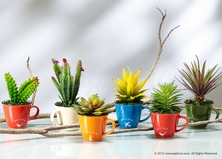 Artificial Plants in Colourful Mugs.